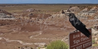 Petrified Forest2